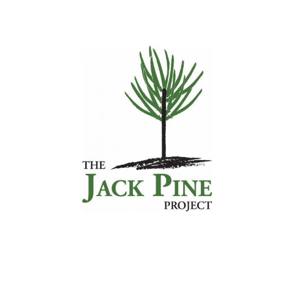 jack pine project